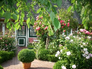 Im Sommer blühen vor allem die vielen Rosen im Garten des Alten Schleusenwärterhäuschens sehr üppig.